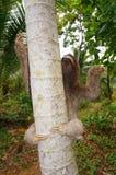 3-toed лень взбираясь на дереве Стоковые Изображения RF