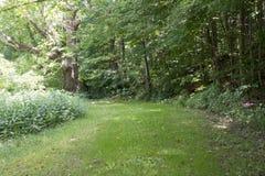 Toegangsweg in het bos royalty-vrije stock afbeelding