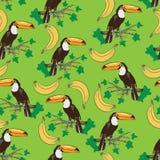 Toekanvogel en bananen Royalty-vrije Stock Fotografie
