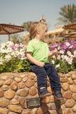 Toekomst, het bloeien, bloesem stock afbeeldingen