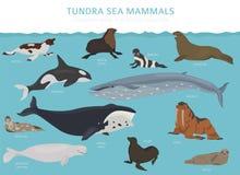 Toendrabioma De kaart van de terrestrisch ecosysteemwereld Noordpool overzees zoogdieren infographic ontwerp royalty-vrije illustratie