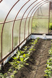 Toeplitz. Seedling of vegetables in the protected soil royalty free stock photo