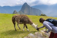 Toerist die een lama petting in Machu Picchu royalty-vrije stock afbeelding