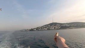 Toerist die een stuk die van brood houden en de zeemeeuwen proberen te voeden, in een boot zitten stock videobeelden