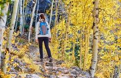 Toerist die in espbosje bij de herfst wandelen stock fotografie