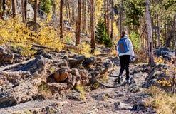 Toerist die in espbosje bij de herfst wandelen royalty-vrije stock afbeeldingen