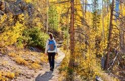 Toerist die in espbosje bij de herfst wandelen stock afbeeldingen
