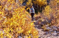 Toerist die in espbosje bij de herfst wandelen royalty-vrije stock fotografie