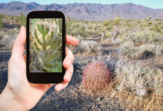 Toerist die foto van cactus in Mojave-Woestijn schieten Royalty-vrije Stock Afbeeldingen