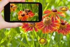 Toerist die foto van honingbij in de zomer nemen stock afbeelding