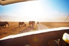 Toerist die in jeep het letten op olifanten weg kruisen stock foto