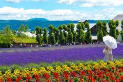 Toerist die van het de bloemengebied genieten van de vest violette Lavendel royalty-vrije stock fotografie