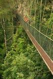 Toerist die zich op luifelgang bevinden, het Nationale Park van Taman Negara, stock fotografie