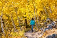 Toerist in espbosje bij de herfst royalty-vrije stock foto's