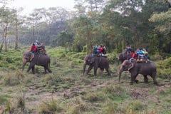 Toerist op een olifantssafari in het Nationale Park van Chitwan, Nepal Stock Fotografie
