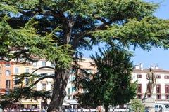 Toeristen, cederboom, bronsstandbeeld op Piazza Bustehouder Royalty-vrije Stock Foto's