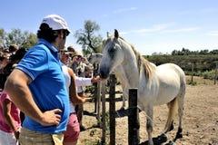 Toeristen die Camargue-paarden ontdekken Stock Fotografie