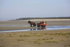 Toeristen die de Baai van Somme op een paardvervoer bezoeken, Frankrijk Royalty-vrije Stock Afbeelding