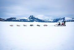 Toeristen die door sleehond worden getrokken op gletsjer Royalty-vrije Stock Afbeeldingen