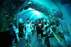Toeristen die langs de tunnel in S.E.A. Aquarium lopen Stock Afbeeldingen