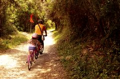Toeristen die met bycicles in toeristische reisroute van nationaal bospark gaan stock afbeelding