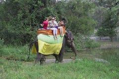 Toeristen die op een olifant berijden Sri Lanka Royalty-vrije Stock Fotografie