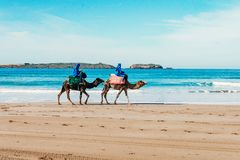 Toeristen op kamelen op het strand Toerisme in Marokko, Algerije, Tunesië reis concept stock fotografie
