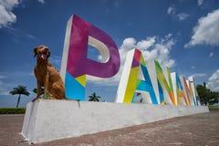 Toeristenhond in de Stad van Panama stock foto