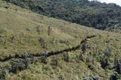 Toeristenvrouw die richting op de weg onder heuvels tonen bij het nationale park stock fotografie