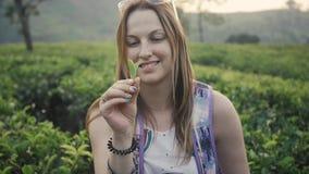 Toeristenvrouw onder vele theeaanplantingen in Sri Lanka, gelukkige vrouwenwandelaar stock videobeelden