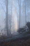 Toeristische Kroatië/Misty Mountain Forest stock afbeelding