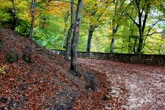 Toeristische weg aan Poiana Brasov Royalty-vrije Stock Afbeelding