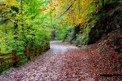Toeristische weg aan Poiana Brasov Royalty-vrije Stock Foto