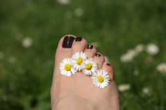 Toes with daisies Royalty Free Stock Photos