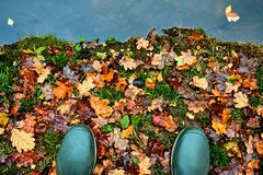 Toes of green rubber waterproof boots in Autumn or Fall standing on the leafy bank of a river, canal or lake.  Stock Image