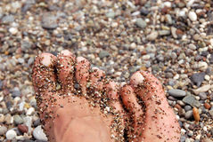 Toes in pebble. Wet women toes on crossed feet in pebble closeup Royalty Free Stock Photos