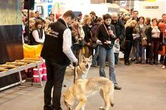 Toespraak op de wolf royalty-vrije stock fotografie
