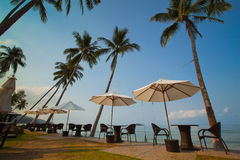 Toevlucht op het paradijsstrand met palmen Stock Afbeeldingen