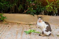 Toevluchtkat die in zon zonnebaden Royalty-vrije Stock Fotografie
