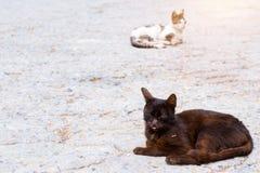 Toevluchtkat die in zon zonnebaden Stock Fotografie