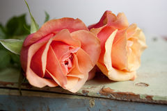 Toffee colored roses. Two toffee colored roses on rustic table Royalty Free Stock Photos