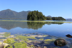 Tofino, BC -植物园 免版税库存图片
