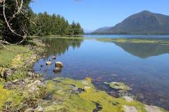Tofino, BC -植物园 库存图片