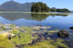 Tofino, BC -植物园 免版税图库摄影