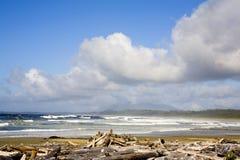 Tofino beach royalty free stock photo