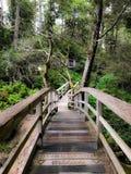 Tofino tropikalny las deszczowy zdjęcia royalty free