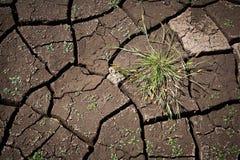 Tofs av gräs på en bakgrund av sprucken jordning Royaltyfria Bilder
