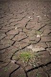 Tofs av gräs på en bakgrund av sprucken jordning Arkivfoto