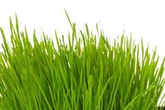 Tofs av gräs Royaltyfri Foto