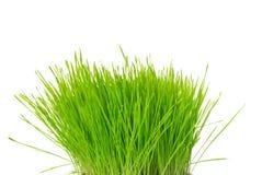 Tofs av gräs Royaltyfria Foton